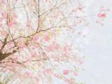 韩语每日一句:婚姻